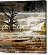 Mammoth Hot Springs Beauty Canvas Print