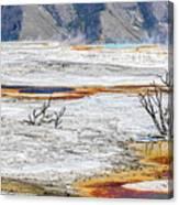 Mammoth Hot Springs Canvas Print