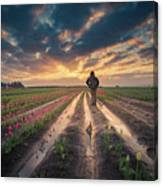 Man Watching Sunrise In Tulip Field Canvas Print