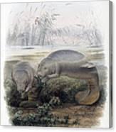 Manatees, Vulnerble Species Canvas Print