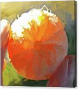 Mandarin Canvas Print