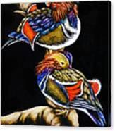 Mandarin Ducks - Sa106 Canvas Print