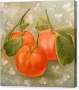 Mandarins Canvas Print