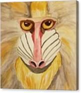 Mandrill Monkey Canvas Print