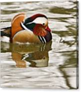 Mandrin Duck Going For A Swim Canvas Print