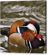Mandrin Duck Posing Canvas Print