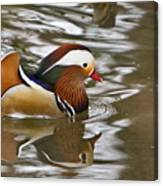 Mandrin Duck With A Purpose Canvas Print