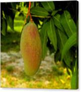 Mango Work Number One Canvas Print
