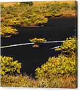 Mangrove River Panoramic Canvas Print