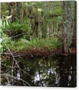 Mangrove     Wild Canvas Print