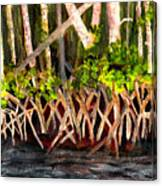 Mangrove At Gumbo Limbo Canvas Print