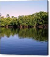 Mangrove Forest Canvas Print