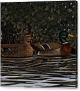 Mangrove Mallards Canvas Print