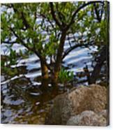 Mangroves And Coquina Canvas Print