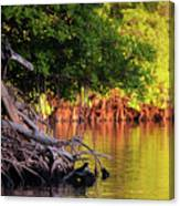Mangroves Of Roatan Canvas Print