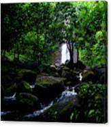 Manoa Falls Stream Canvas Print