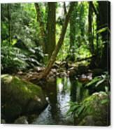 Manoa Valley Stream Canvas Print