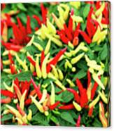 Many Peppers Canvas Print