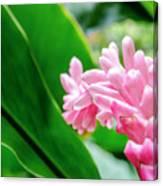 Many Pink Petals Canvas Print