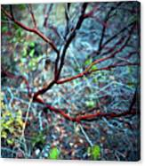 Manzanita Abstract Canvas Print