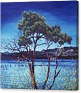 Manzanita At Lake Hemet Canvas Print