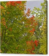Maple Aflame Canvas Print