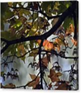 Maple Color Canvas Print