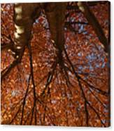 Maple Dreaming Canvas Print