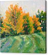 Maple Grove Canvas Print