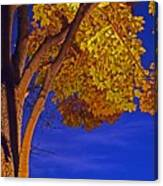 Maple In The Night Canvas Print