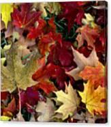Maple Leaf Colors Canvas Print