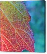 Maple Leaf In Autumn Canvas Print