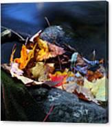 Maple Leaves-0004 Canvas Print