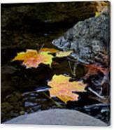 Maple Leaves-0006 Canvas Print