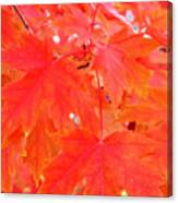 Maple Leaves 3 Pd  Canvas Print