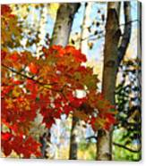 Maple Leaves And Birch Bark Canvas Print