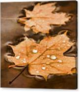 Maple Leaves And Drops Pnt Canvas Print