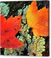 Maple Leaves On Fallen Log Canvas Print