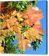 Maple Mania 1 Canvas Print