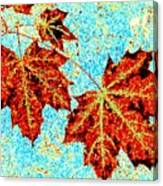 Maple Mania 13 Canvas Print