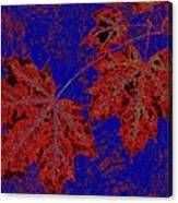 Maple Mania 15 Canvas Print