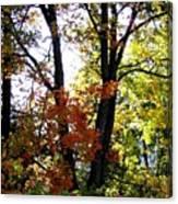 Maple Mania 16 Canvas Print