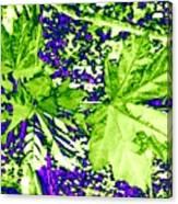 Maple Mania 19 Canvas Print