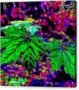 Maple Mania 23 Canvas Print