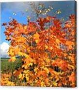 Maple Mania 8 Canvas Print