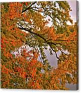 Maple Over The River Canvas Print