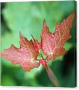 Maple Red And Green Canvas Print