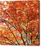 Maple Tree Foliage Canvas Print