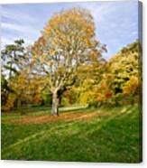 Maple Tree On The Slope. Canvas Print