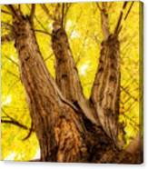 Maple Tree Portrait 2 Canvas Print